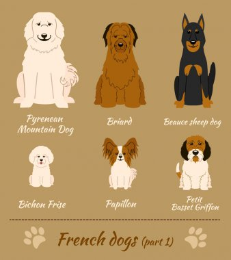 French breed of dogs