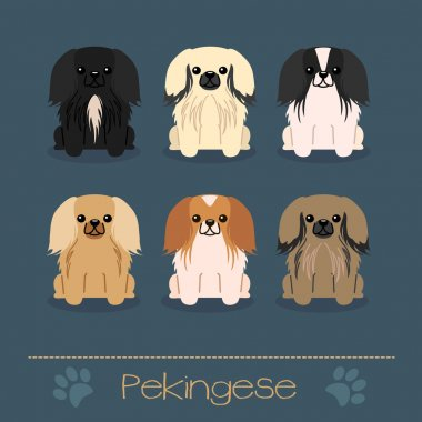 Different colors Pekingese