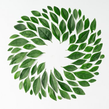 Green leaves arranged in spiral shape