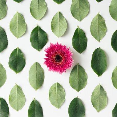 Pink flower on green leaves pattern