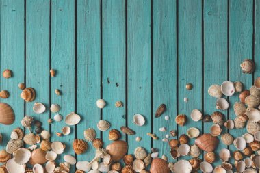 Pattern made of sea shells.