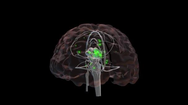 3D animace mozku