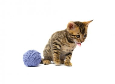kitten with tongue plays a ball of thread