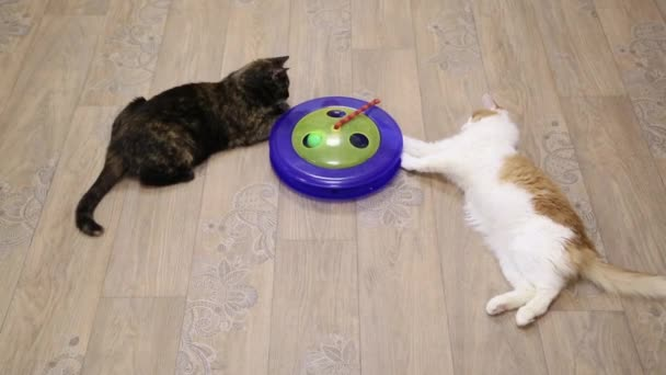 Two cats playing game on the floor
