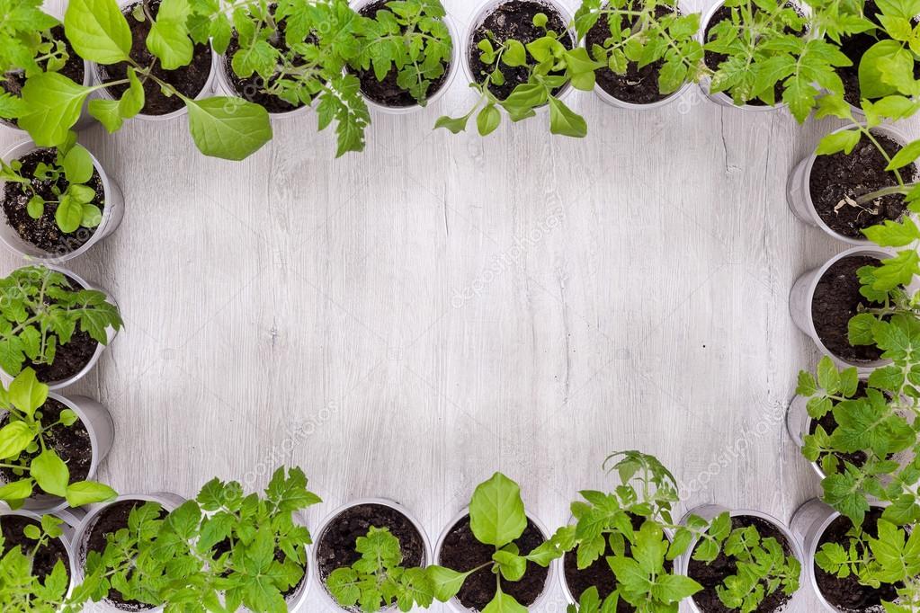 Marco de vasos de plástico con las plántulas vegetales con el lugar ...