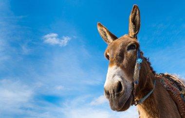 Donkey, farm animal