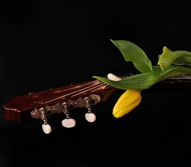 Beautiful tulips and a guitar on a black background