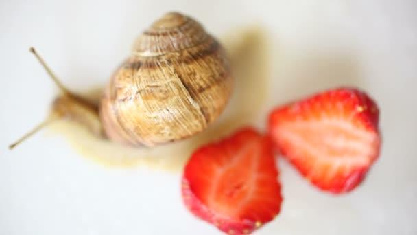 šnek plíží mezi jahody na bílé