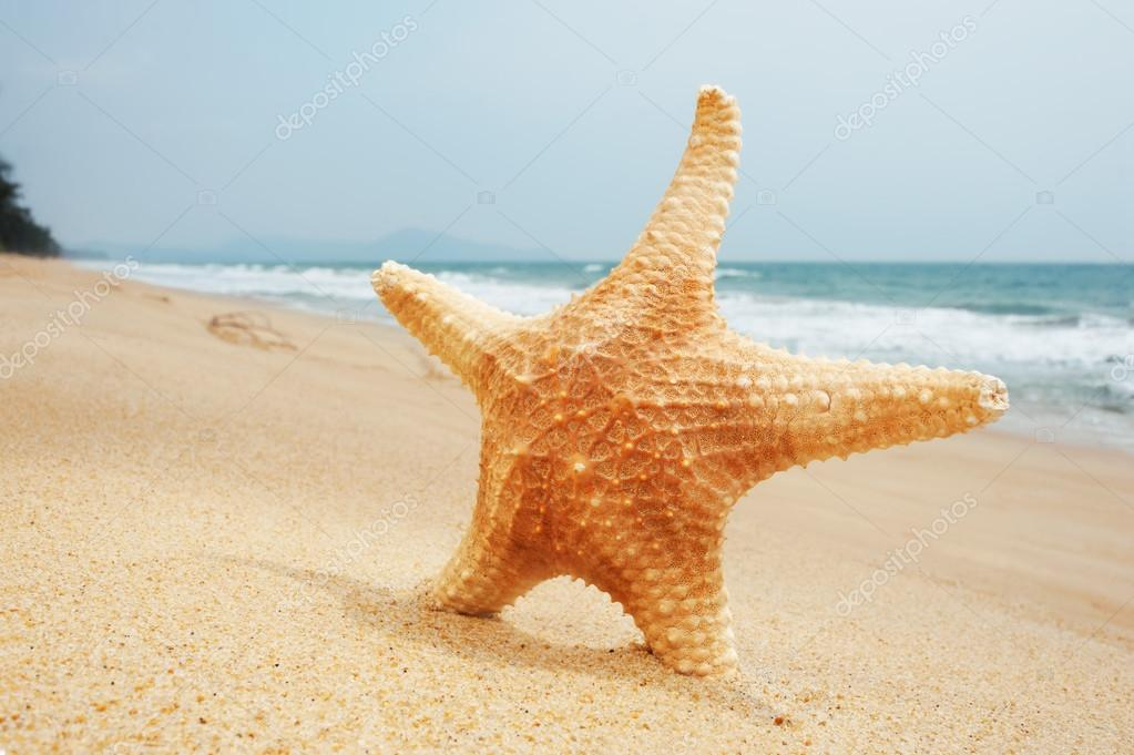 2decfd8f1b1d étoile de mer est sur le sable — Photographie cppzone.mail.ru ...