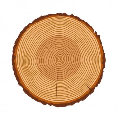 Tree trunk rings vector texture isolated