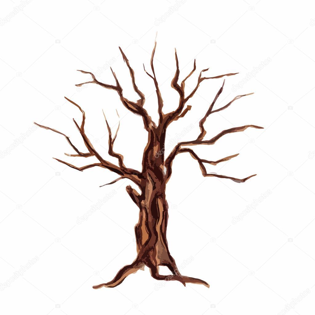 Dibujos Bosques Secos árbol Seco Acuarela Vector De Stock