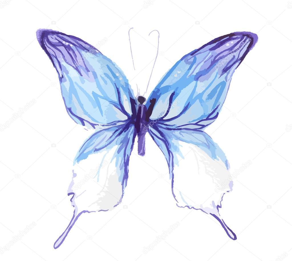 Isolated watercolor butterfly.
