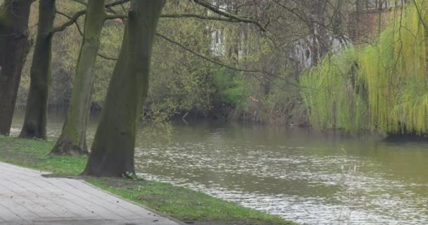 Aszfaltozott járda-Városliget fűzfa közelében a folyó tavasszal friss zöld levelek csupasz ágak víz folyik