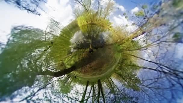 Chodící lidé v Green parku sférické panoráma svěží zelené stromy slunečný den lidé jsou pěší turisté chodci Blue Sky Video pro virtuální realitu