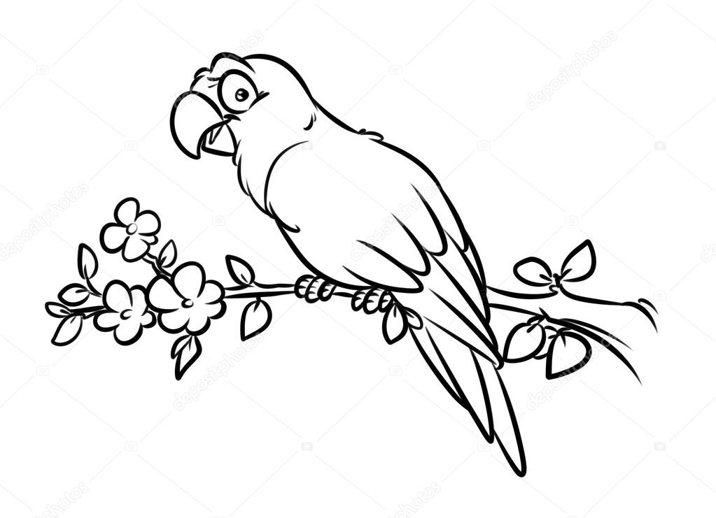Parrot coloring pages — Stock Photo © Efengai #105557314