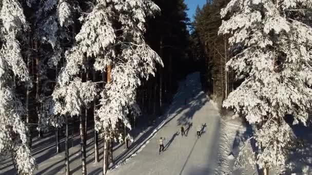 Letecká fotografie. Lyžaři běží po biatunové stezce v zasněženém lese. Pohled shora