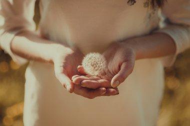 girl's hands holding a dandelion