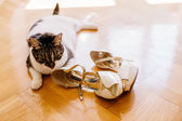 Fotografie cat playing with shoes