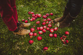 Fotografie red apples and couples