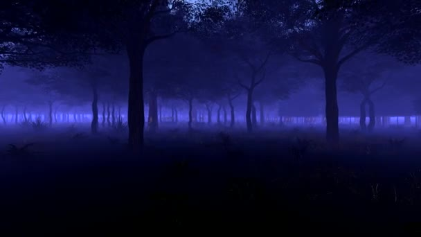 Strolling through the trunks of a forest of trees. Night forest fog