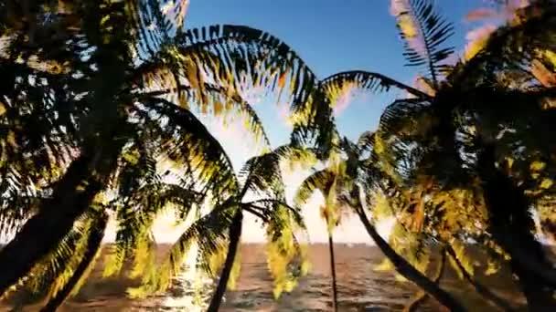 Nádherný pohled na oceán pozadí větvemi Palm