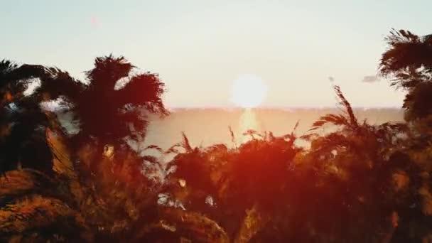 Palmové stromy a slunce. Pěkný západ slunce na pláži. Krásný západ slunce na pláži, úžasné barvy, světelný paprsek svítí skrz závojem mračen. 3D animace. Západ slunce čas kola