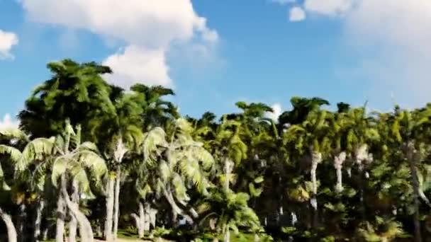 Kamera se létá po celém ostrově. Přesun na nádherné pláži, do oblasti skal a stromů. Večerní slunce, letoviska ostrov