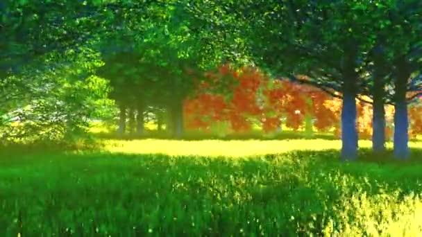 Sluneční paprsky osvětlují mýtinu v lese