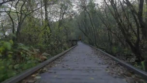 Pohyb kamery po stezce v lese