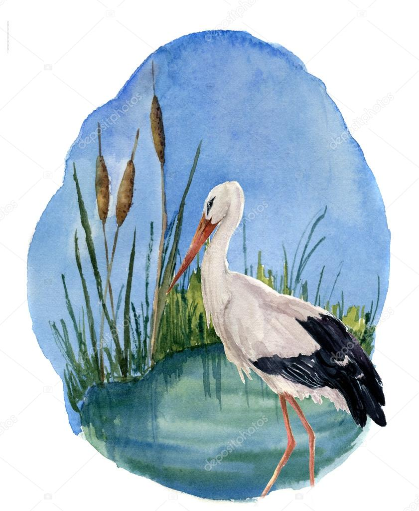 Watercolor White Stork On The Swamp Ciconia Bird Illustration
