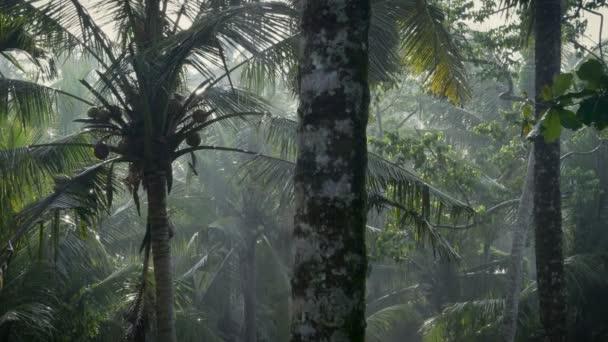 Dolly záběr svěží tropické džungle slunci sprcha deště