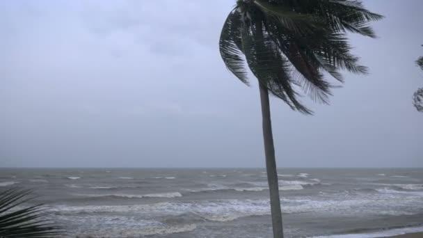 Erős szél fúj keresztül egy kókuszdió fa hajlító a tenyér felszínű levelek az óceán