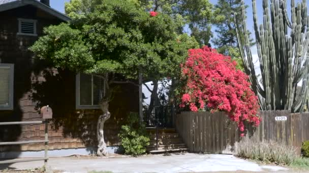 Establishing shot of a wooden shingle house with red bougainvilleas - daytime