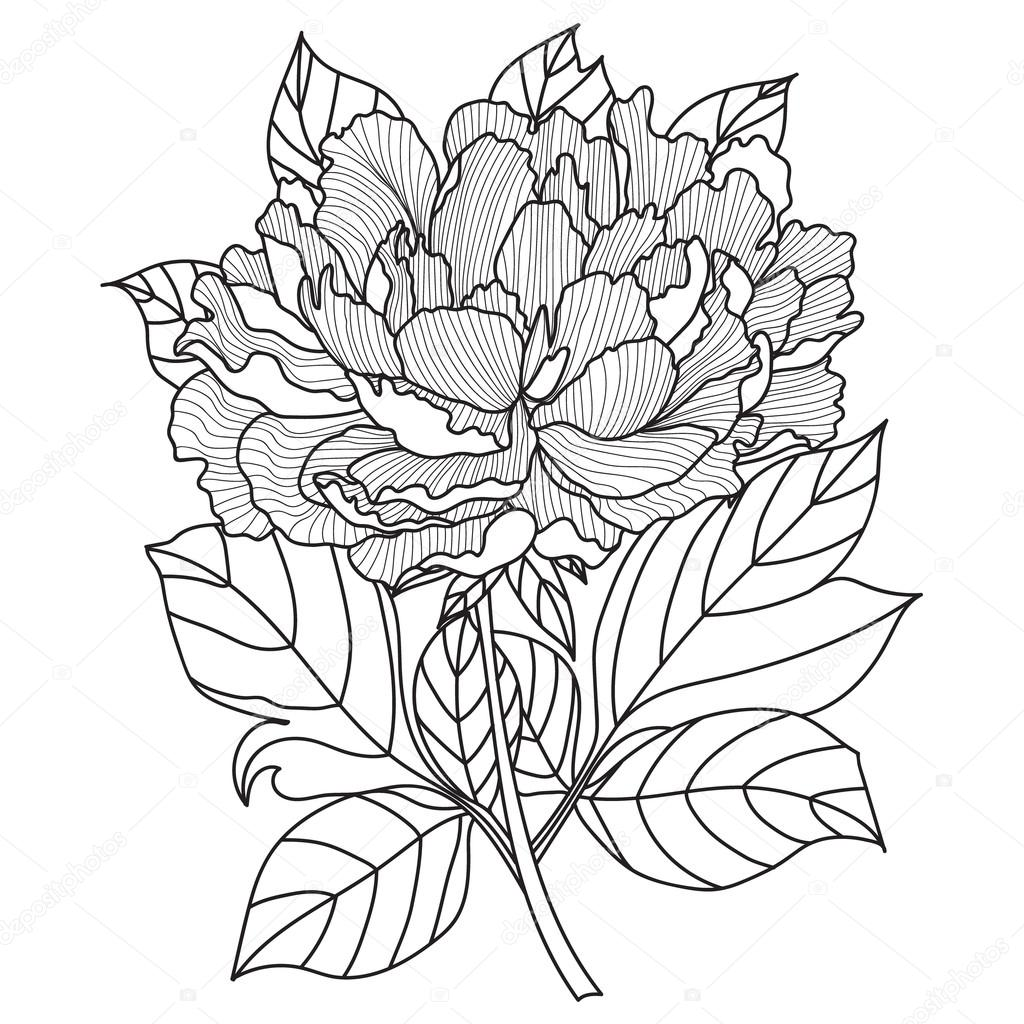 Vector Peony.Coloring book page for adults. Hand drawn artwork.