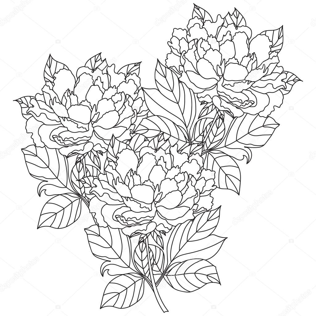 Peony bouquet. Vector. Coloring book page for adults. Hand drawn artwork.
