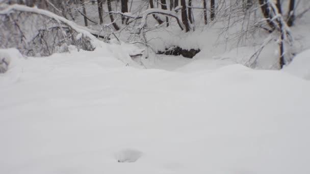 Zimní lesní porost.