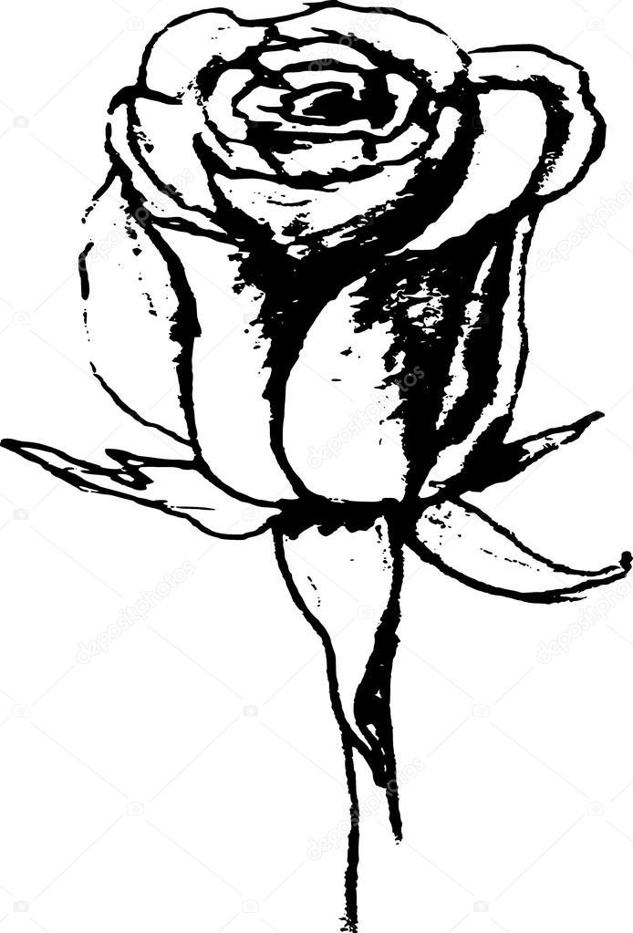 Dibujos Rosas Dibujadas En Blanco Y Negro Rosa Dibujo Blanco Y