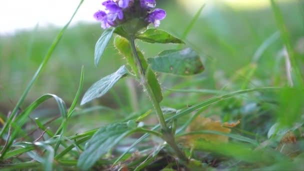 Eine grüne Raupe, die sich auf einer violetten Blume auf einer Wiese dreht