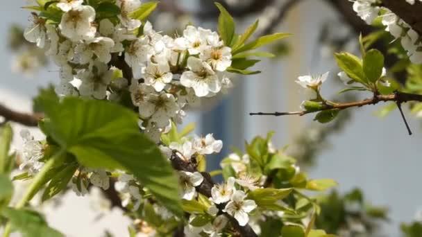 Kvetoucí jarní zahrady