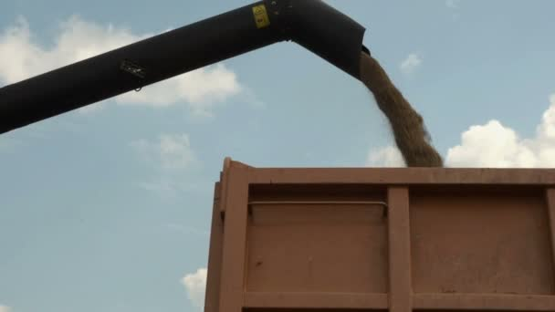 Combine harvester unloading gathered grains into tractor trailer at bright sun