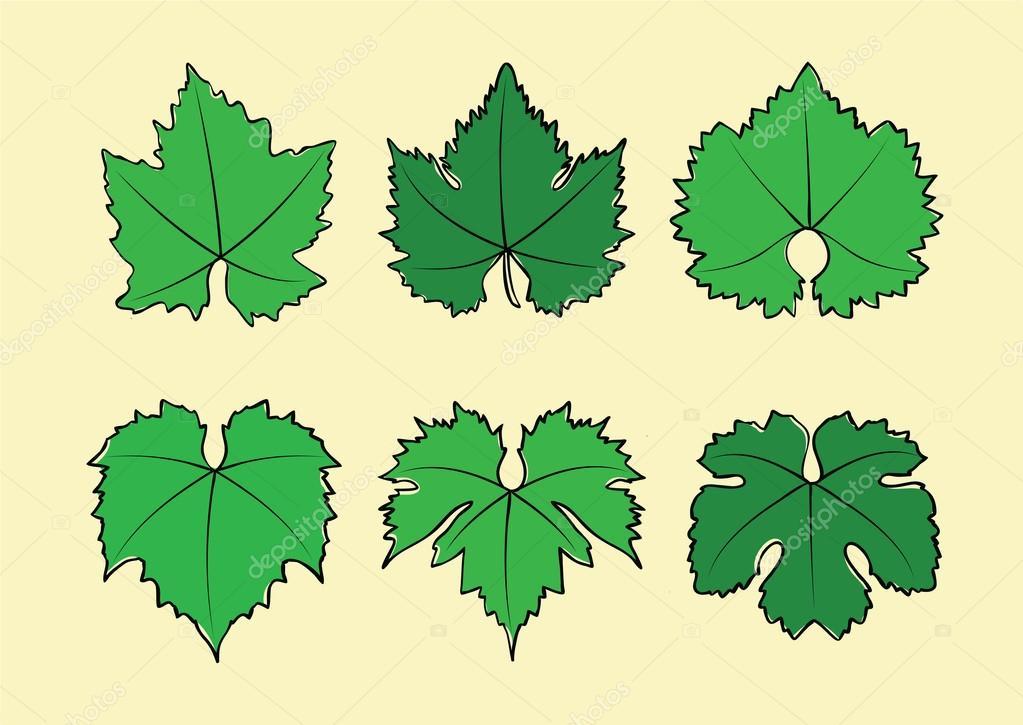 feuilles de vigne vins image vectorielle sunflake 118159052. Black Bedroom Furniture Sets. Home Design Ideas