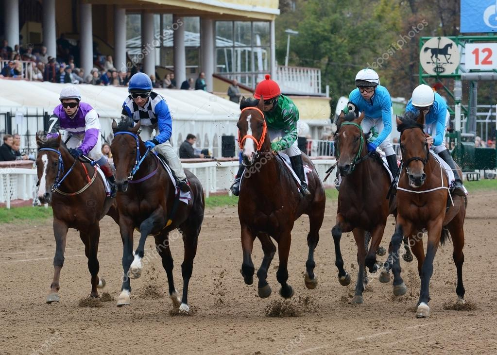 Thoroughbred horses in racing
