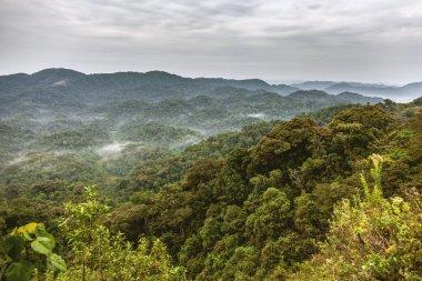 """Картина, постер, плакат, фотообои """"руанда тропических лесов. небо и горы сопровождать с тропическими лесами."""", артикул 106739596"""