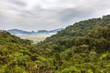 "Картина, постер, плакат, фотообои ""таинственные тропические леса облачное небо, горы и вид тропических лесов ."", артикул 106739846"