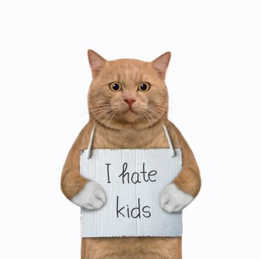 A reddish cat with a sign around his neck that says I hate kids. White background. Isolated.