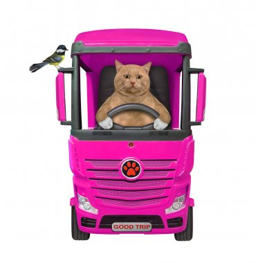 A reddish cat is driving a big red pink truck. A bird is on a car mirror. White background. Isolated.
