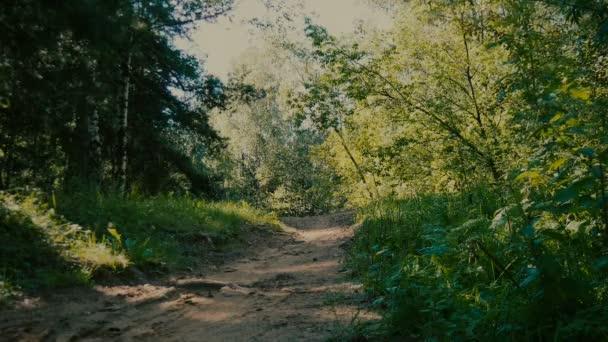 cyklista jede lesem