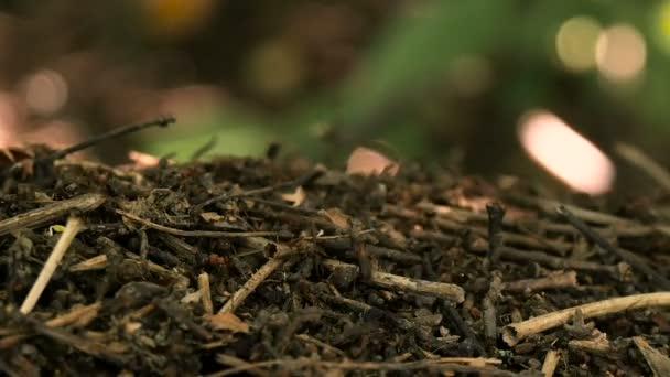 Život Mravenčí kopec v lese letní