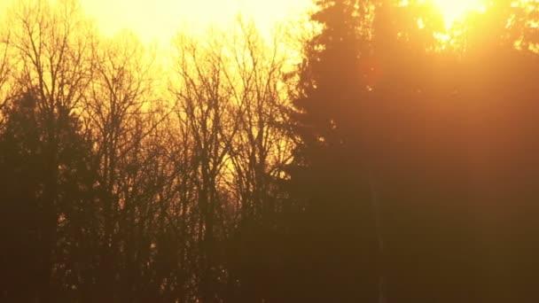 Západ slunce v lese. Paprsky slunce svítí přes les. Večerní slunce paprsky v lese