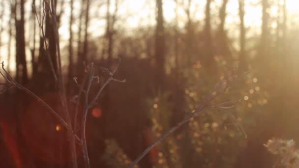 Podzimní Les ráno. Sluneční paprsky zářit skrze větve stromů